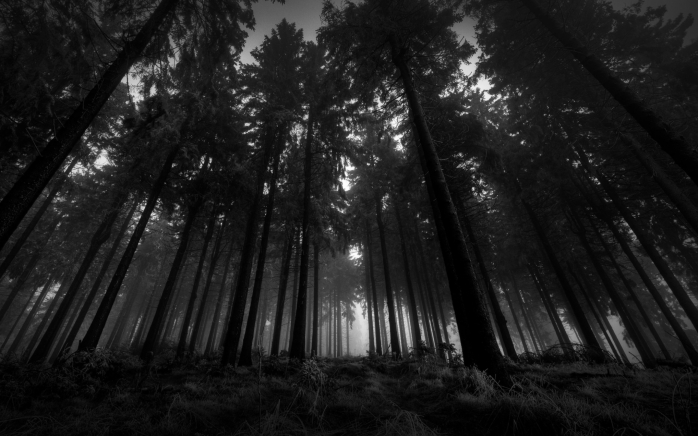 black_and_white_landscapes_nature_trees_forest_1920x1200_wallpaper_Wallpaper_2560x1600_www.wall321.com
